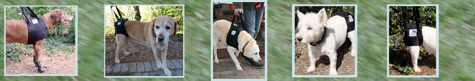 Tragehilfen für Hunde Banner von Tom Berger