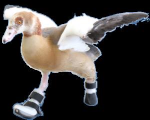 Goose Run Picture