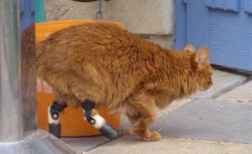 Katze mit Prothesen