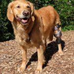 Orthesenversorgung Hund