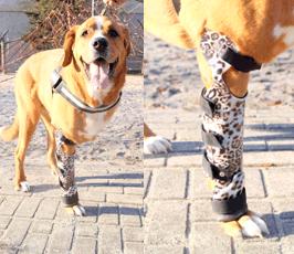 Prothesen Versorgung Hund