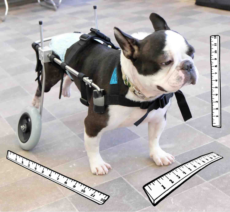Hund vermessen